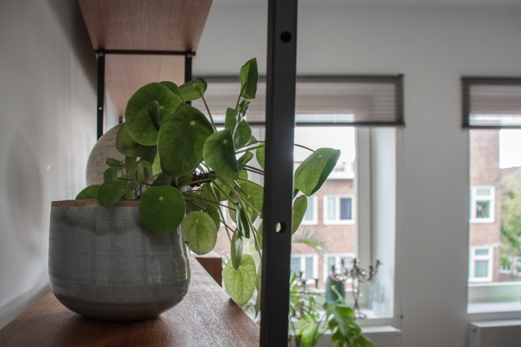 Livingroom plantJan van Gallen_